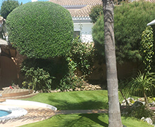 Garden with fresh lawn and trimmed hedges