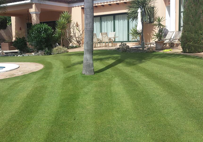 Freshly cut lawn