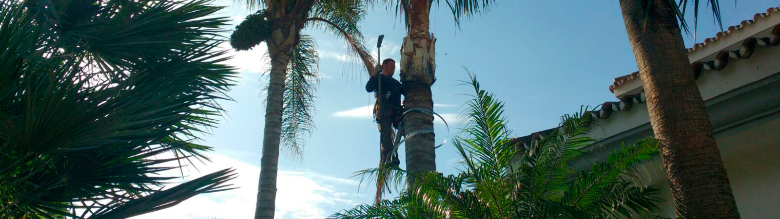 Pruning and cleaning palms trees