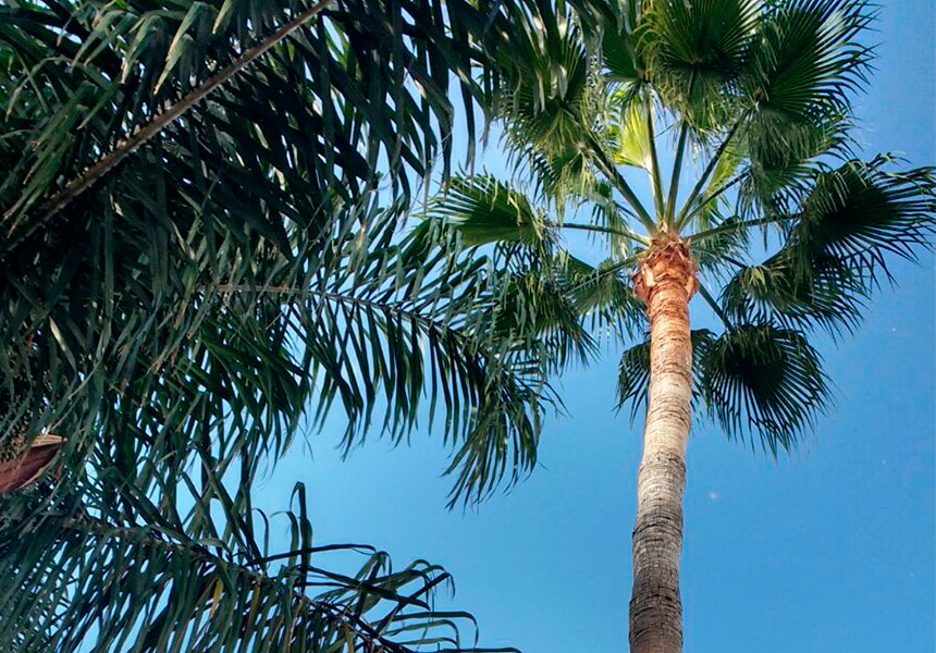 Pampera limpia y talada Marbella