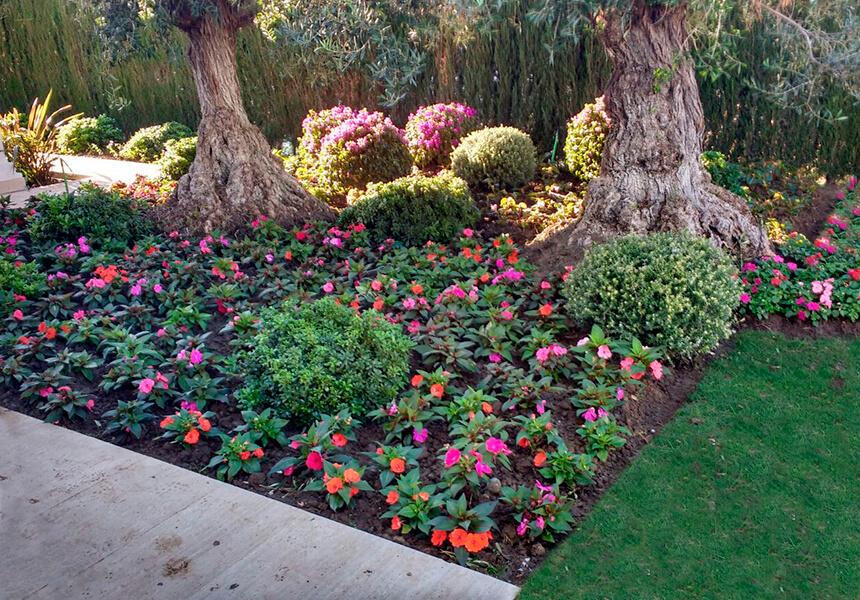 Flores y plantas recien plantadas